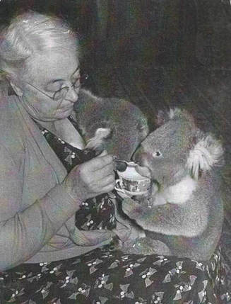 Florence ('Zing') Oswin-Roberts cares for a koala at her home, 'Broadwater', Cowes
