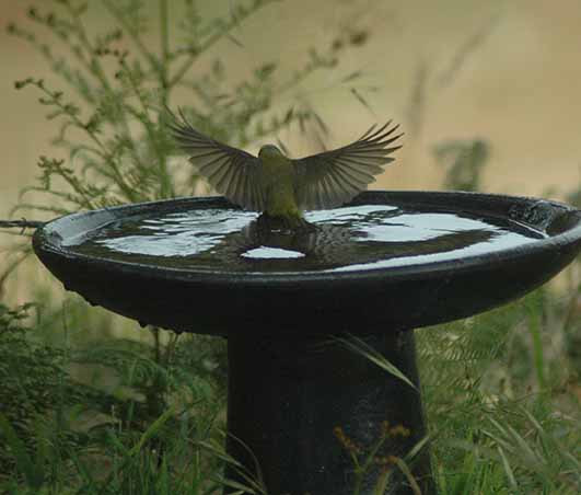 Birdbath, Wonthaggi. Photo Catherine Watson